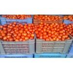 Tomato  hybrid 1 box